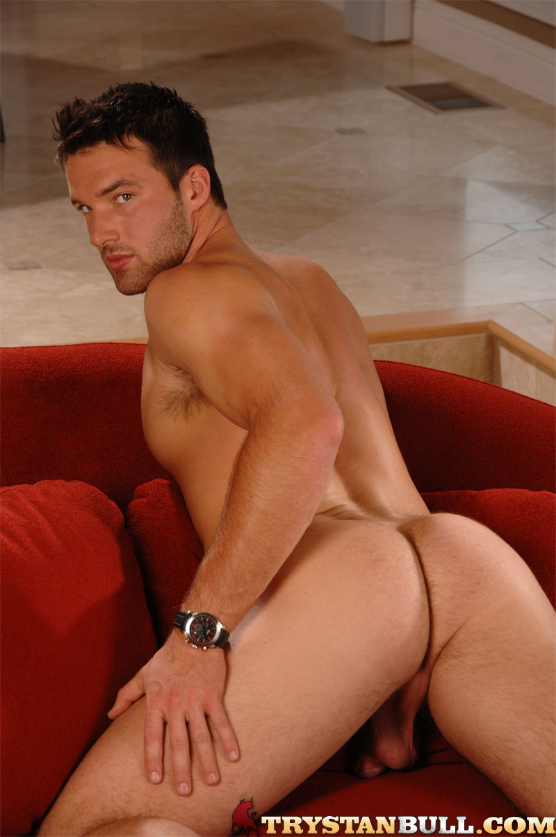 Canadian Stud Trystan Bull Hot